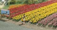 Busch 120 Tulpen