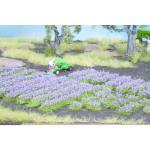 Noch Lavendel 07136